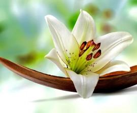 Terapia para aceptar las perdidas de seres queridos.